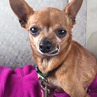 Adopt A Pet :: Sugar - Monrovia, CA