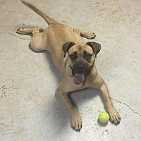 Adopt A Pet :: Harlowe - Alpharetta, GA