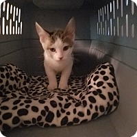 Adopt A Pet :: Twister - Livonia, MI