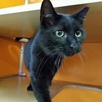 Adopt A Pet :: Ace - Elyria, OH