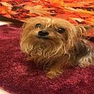 Adopt A Pet :: *DAME