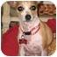 Photo 4 - Chihuahua Mix Dog for adoption in petaluma, California - Cupcake