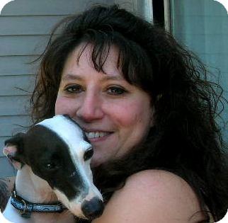 Italian Greyhound Dog for adoption in Plain City, Ohio - Bolt