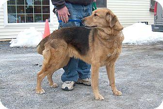Shepherd (Unknown Type) Mix Dog for adoption in Washingtonville, New York - Jake