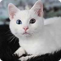 Adopt A Pet :: Merlin - Eagan, MN