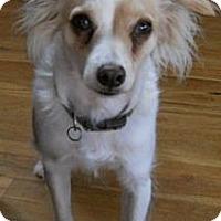 Adopt A Pet :: Riley - dewey, AZ