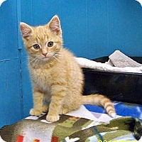 Adopt A Pet :: Nugget - Dover, OH