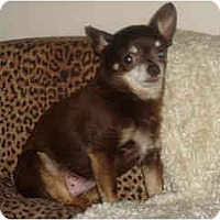 Adopt A Pet :: Topo Gigo - Scottsdale, AZ