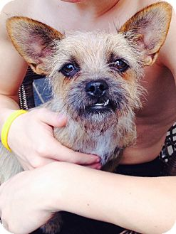 Terrier (Unknown Type, Small) Mix Dog for adoption in McKinney, Texas - Annie