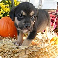 Adopt A Pet :: Neptune - Millersville, MD
