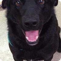 Adopt A Pet :: Logan - Valley Falls, KS