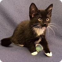 Adopt A Pet :: Flip - Templeton, MA