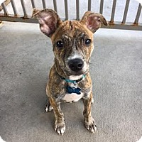 Adopt A Pet :: Córdoba - Houston, TX