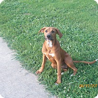 Adopt A Pet :: Emily - Boston, MA