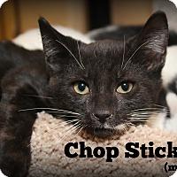 Adopt A Pet :: Chop Stick - Glen Mills, PA