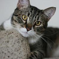 Adopt A Pet :: Robin Hood - Canoga Park, CA