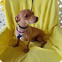 Adopt A Pet :: Peanut - Toronto, ON