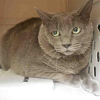 Adopt A Pet :: KIKI - ID#A355227 - Petaluma, CA