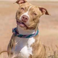 Adopt A Pet :: Jade - Divide, CO