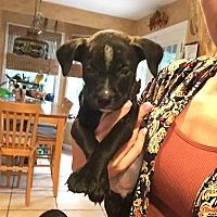 Adopt A Pet :: Salisbarry - Tuckerton, NJ