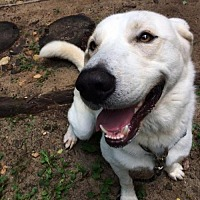 Adopt A Pet :: Chance - Asheville, NC