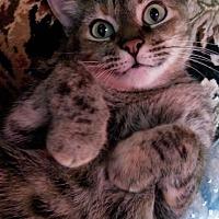 Adopt A Pet :: Renée - Houston, TX