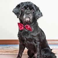 Adopt A Pet :: NIKO - Fort Lauderdale, FL
