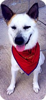 Cattle Dog/Husky Mix Dog for adoption in Youngstown, Ohio - Chandler ~ Adoption Pending
