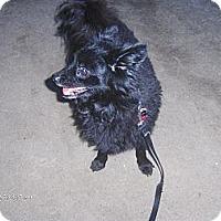 Adopt A Pet :: Aragon - Jacksonville, FL
