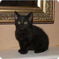 Adopt A Pet :: Craig - Oxford, CT