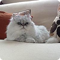 Adopt A Pet :: Zoe - Naples, FL