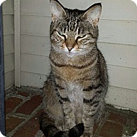 Adopt A Pet :: Petey - Whitestone, NY