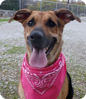 German Shepherd Dog Mix Dog for adoption in Circleville, Ohio - Brandy