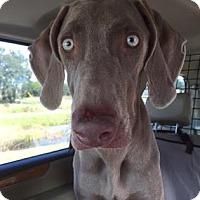Adopt A Pet :: Flye - Sarasota, FL