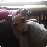 Adopt A Pet :: Chloe - SD - Costa Mesa, CA