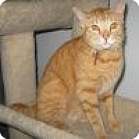 Adopt A Pet :: Copper - Powell, OH