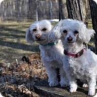 Adopt A Pet :: CHASE AND LEXI - Elk River, MN