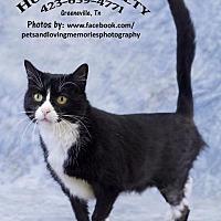 Adopt A Pet :: Blackie - Greeneville, TN