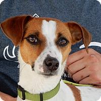 Adopt A Pet :: Lola - Long Beach, NY