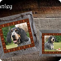 Adopt A Pet :: Stanley FOSTER NEEDED - Ontario, ON