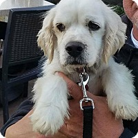 Adopt A Pet :: Lou - Santa Barbara, CA