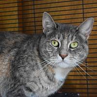 Adopt A Pet :: Powder - Pine Bush, NY
