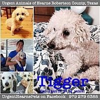 Adopt A Pet :: Tigger - Hearne, TX