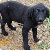 Adopt A Pet :: Alec - Burlington, VT