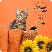 Adopt A Pet :: 70712  Glo - Wetumpka, AL