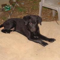Adopt A Pet :: kramer - benton, TN