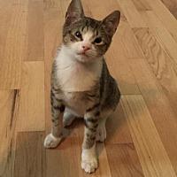 Adopt A Pet :: Jeff - Trenton, NJ