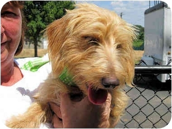 Terrier (Unknown Type, Small) Mix Dog for adoption in Mahwah, New Jersey - Truman