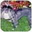 Photo 3 - Lhasa Apso Dog for adoption in Los Angeles, California - RIVA