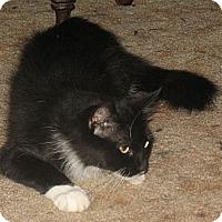 Adopt A Pet :: Queenie - Acme, PA